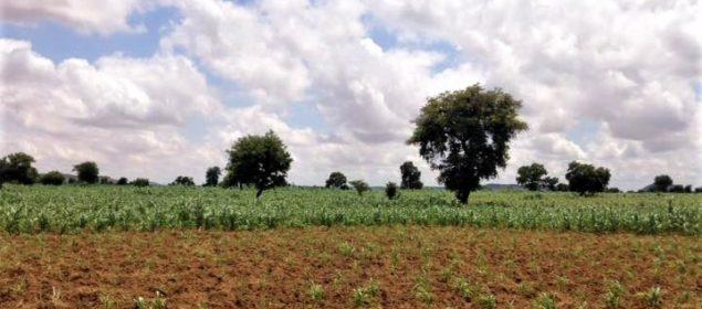A farmer's field in Niger