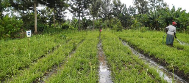 Digital tools can impact agriculture. Field in Kenya, 2012.